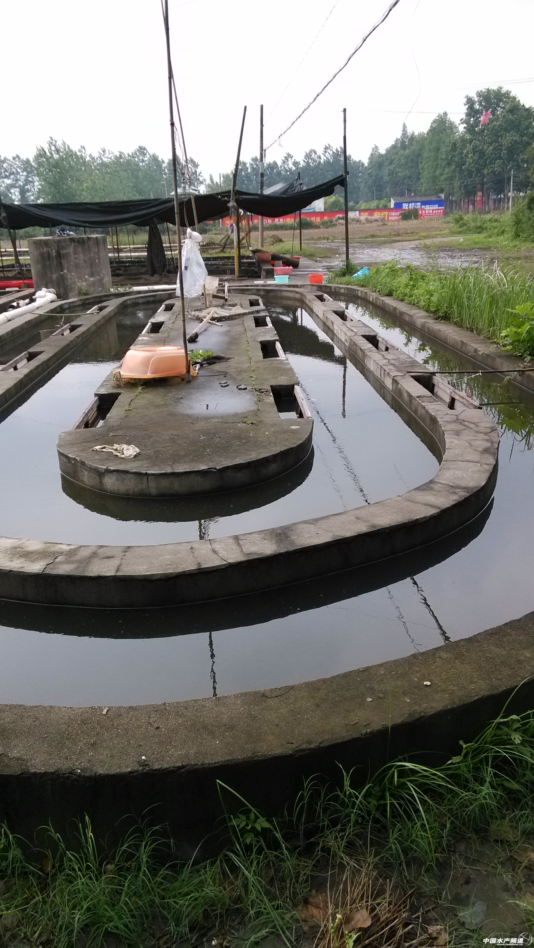 孵化槽 -一等奖 实习足迹 水产前沿 首届全国高校水产实习征文
