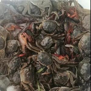 虾蟹发病严重全塘陷入危机,如何防控?