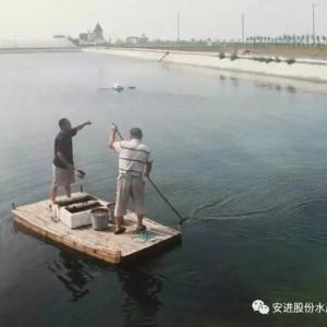 入伏后高温养殖期的池塘管理攻略
