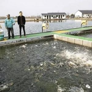 跑道里养鱼,为生态化养殖添砖铺路