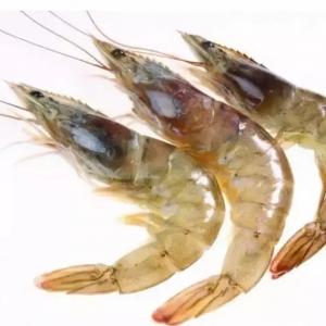 白虾虾头变色的原因究竟是什么?