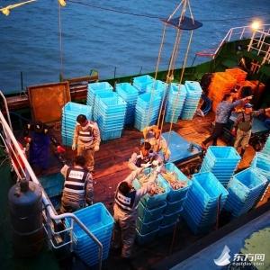 俄罗斯鲜活帝王蟹进口今年同比增长687%!第八船次已到沪