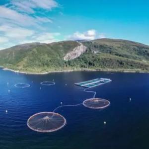 美威花7.9亿挪威克朗价收购小型三文鱼厂商